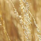 Glitter Gold Grasses by lorilee