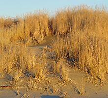 Washington Beach Sand Dune by Robert Meyers-Lussier