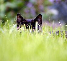Catch A Cat's Eye by Guyzimijz