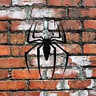 Spider on a wall by angeliana