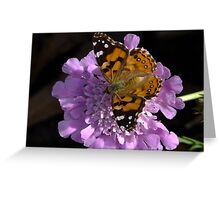 Meadow Argus Butterfly on a Granny's Pincushion Greeting Card