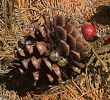 Dried Wreath and Pine Cone by Joy  Rector