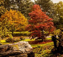 Autumn at Batsford  by yampy