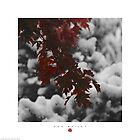 Red, Black & Snow by Don Bailey