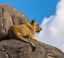 Basking in the Sunlight by mister-matt