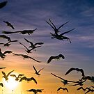 Flock of Seagulls by PhotoJoJo