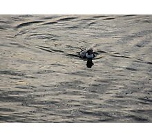 Moire Silk Water and a Long Tailed Duck Photographic Print