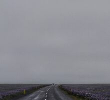 Foggy road between Lupines by gantico