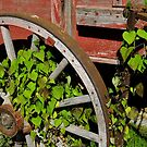 Wheel Of The Mc Cormick by WildestArt