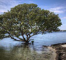 Mangrove Tree by njordphoto