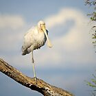 Balancing spoonbill by Jennie  Stock