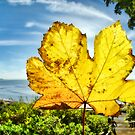 Autumn In Lyme Regis by Susie Peek