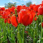 Orange Blossooms by Dani LaBerge