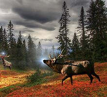 Elk Medicine, Elk Power Animal by Jason Bodary