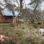 Off the Beaten Track - Dinner Plain, Victoria, Australia. by Sean Farrow