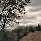 Path to Autumn Beach by Aaron Bottjen