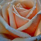 Rose by Bami