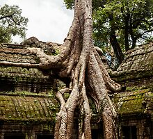 Overgrown Temple: Monk at Angkor Thom, Cambodia by thewaxmuseum