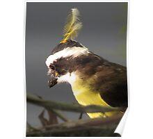 feathered headdress - adorno de la cabeza Poster