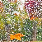 Raindrops in Autumn by Lisa G. Putman