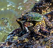 Washed Crab by Roshud Photography