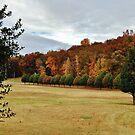 Autumn Beauty by Eileen Brymer