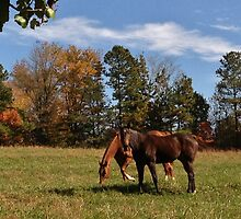 Neighbor Horses by Eileen Brymer