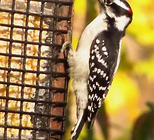 Suet Seeker by lorilee