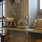 Sala degli Animali - Vatican Museum by roger smith