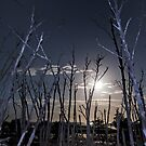 Spooky Trees at 4 Mile Beach by Ladyshark