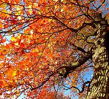 Autumn hues by Alberto  DeJesus
