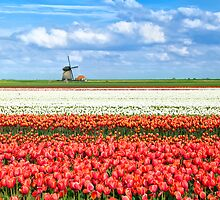Flowering Holland by Olha Rohulya