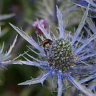 Purple Flower and Bee by RachelSheree