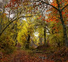 Talk About Fall Colors ~ Takena Trail ~ by Charles & Patricia   Harkins ~ Picture Oregon