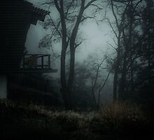 Fog in the woods by va103