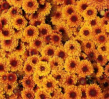Cut Yellow Flowers by rhamm