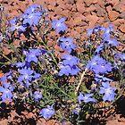 Australian Desert Blue by Lynne Kells (earthangel)