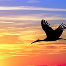 Flight at sunset by annalisa bianchetti
