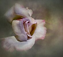 Blush 2 by Jan Pudney