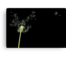 Flower - Dandelion - Gesundheit  Canvas Print