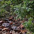 Mountain Stream by Angela Housley
