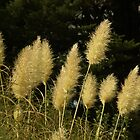 Wild grasses, Adelaide Hill, South Australia by indiafrank
