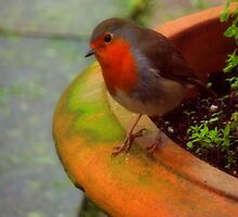 Robin in my Garden by EithneMMythen