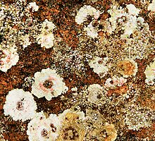 Flowers on a Stone by Angelika  Vogel