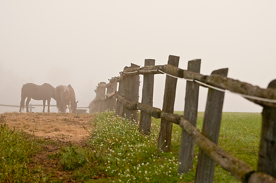 Misty Morning On The Farm by Michael Cummings