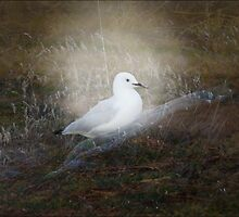 Seagull in the grass - re-done! by Jan Clarke