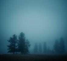 SILENT MORNING, FOG by va103