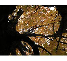 Fall 2013 6 Photographic Print