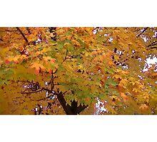 Fall 2013 14 Photographic Print