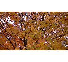 Fall 2013 16 Photographic Print